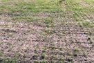 Ростову запретили проводить домашние матчи на Олимп-2 из-за плохого состояния газона