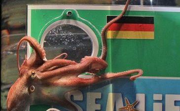 Это осьминог Пауль. Его огорчают твои прогнозы, фото Getty Images