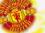 Glory_Glory_Man_United