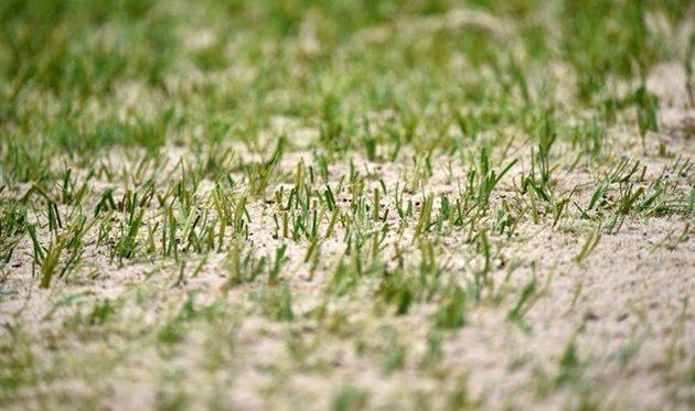 Газон на стадионе В.С. Бойко в день игры против Миная, фото ФК Мариуполь